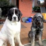 Charis (l.) und Carlo (r.)