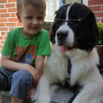 Cooler_Hund