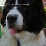 Cooler_Hund_2