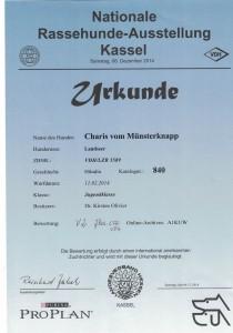 Urkunde_Charis_vom_Muensterknapp_Rassehund_Kassel